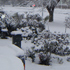 Snow in Stratford, Taranaki. Photo / Wayne Trethewey